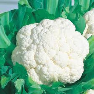 Cauliflower, Snow Crown