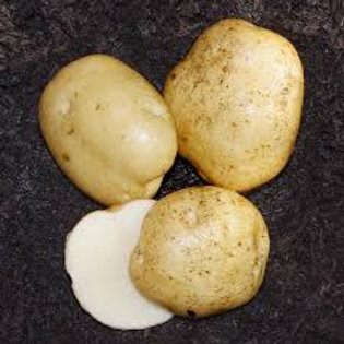 Potato, Superior (Seed)