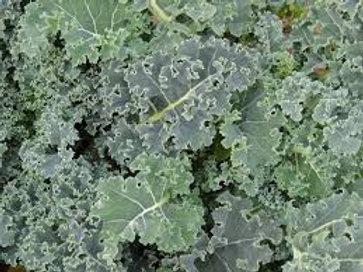 Kale, Scotch Blue Curled