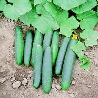 Cucumber, Speedway