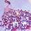 Thumbnail: Magnolia Dream
