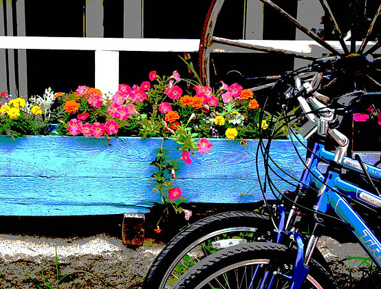 Two blue bicycles in front of a blue planter with multicolored flowers