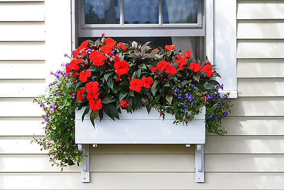 Provincetown - white flower box with red impatiens