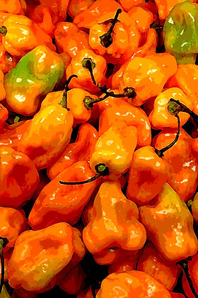 Bright orange hot habanero peppers