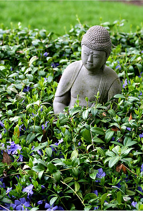 Statue of the Buddha in a bed of myrtle
