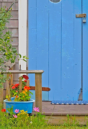 Flowers in a pot in front of a blue door