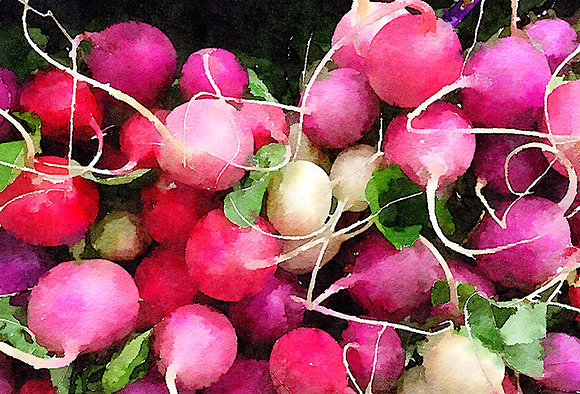 Large bunch of pink, white, and red radishes