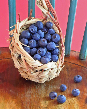 A small basket of blueberries against a coral and teal background