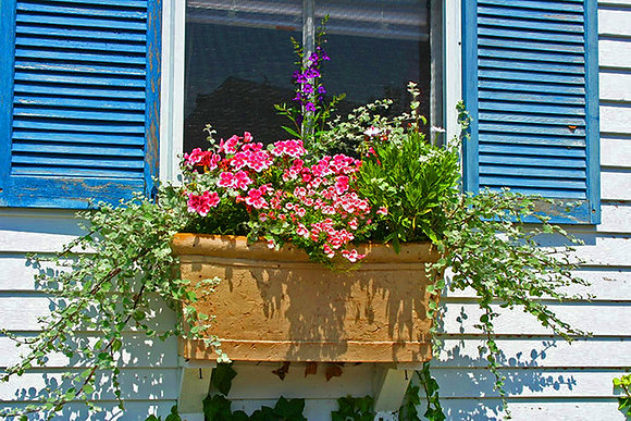Red flowers in a brown window box on a house with blue shutters