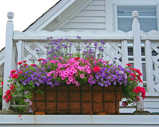 Pink and purple petunias in a flower box in front of a white fence