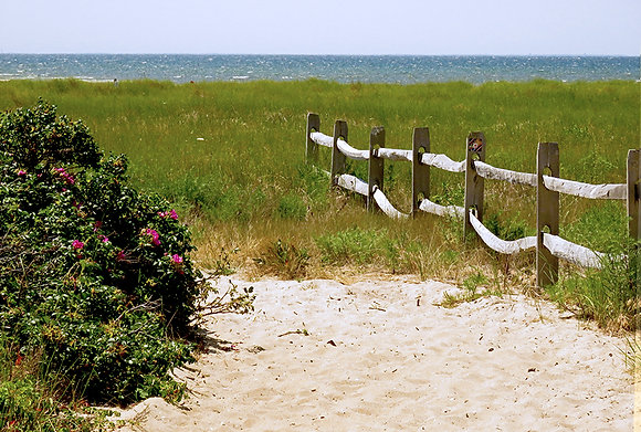 Split-rail fence and beach roses on Cape Cod Bay