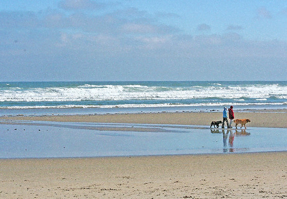 Two people walking on a beach with two dogs