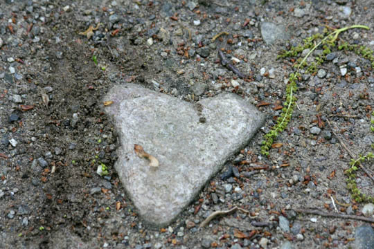 Heart-shaped stone embedded in a hiking trail