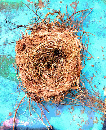 Bird's nest on a turquoise colored bench