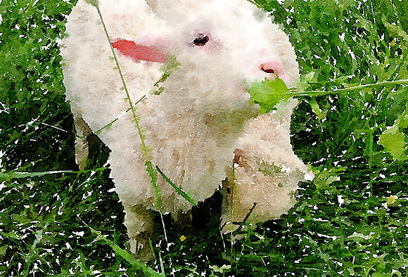 White lamb in green grass