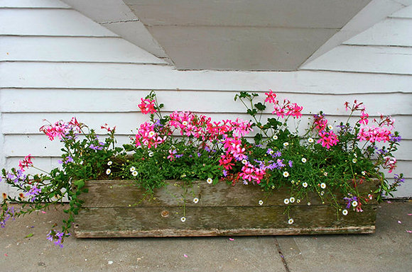 Pink, purple, and white flowers in a weathered wood planter on the sidewalk in front of a white clapboard building