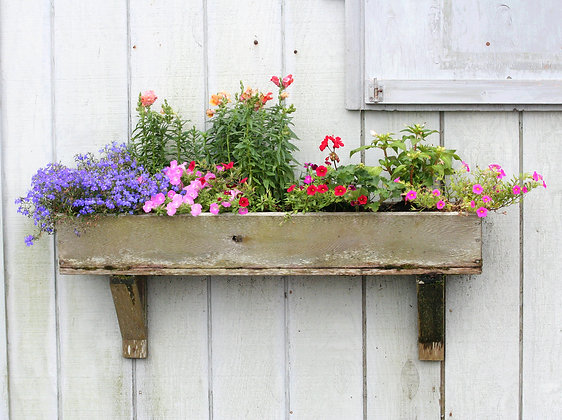 Weathered wood flower box with delicate pink, red, and blue flowers, on a white-washed barn