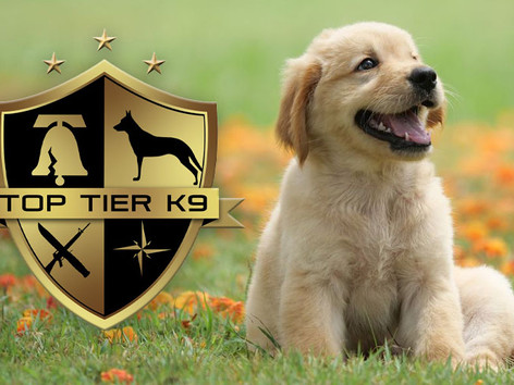 January 7, 2021 Pet Trainer Class