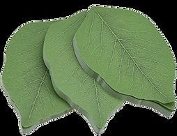 leaf postit transBG.png
