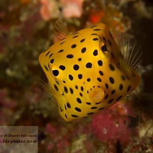 Maldives Grand Sud