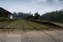 151113_Sri Lanka_MG_7127