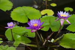 121113_Sri_Lanka_MG_6401