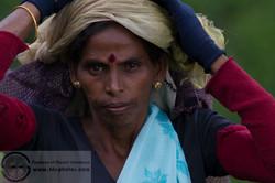 161113_Sri Lanka_MG_7234