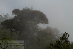 151113_Sri Lanka_MG_8789
