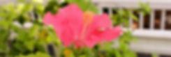 IMG_0611_edited_edited.jpg