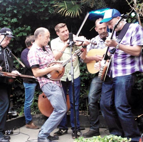 Foggers in the Hampstead Jungle