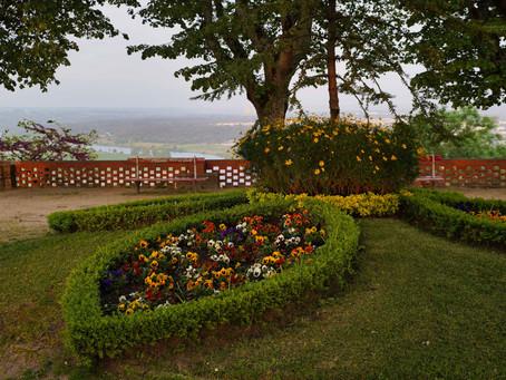 Flores no nosso jardim (do Castelo de Abrantes)