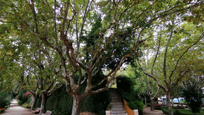 #patrocinado | O jardim do Castelo de Abrantes espera por si