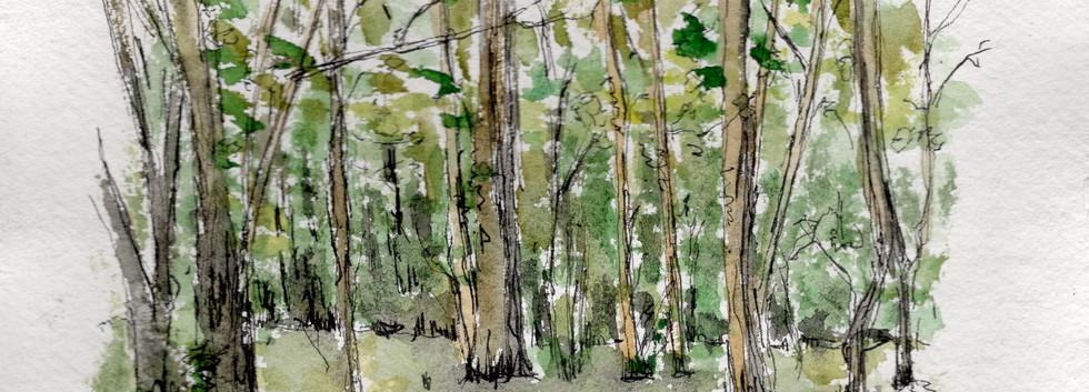 EG009 Woods Eden Vale