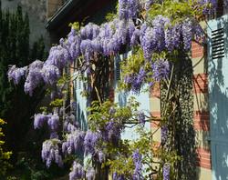 gite-wisteria2-800.jpg