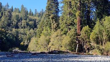 redwoodsrivernew.jpg