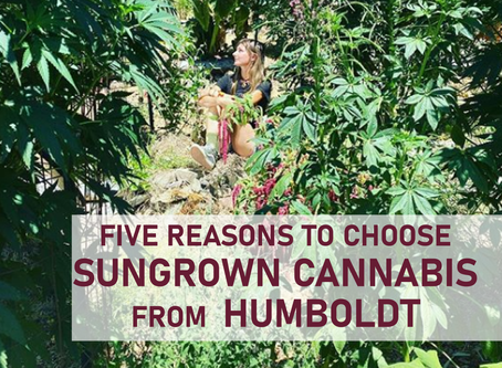 5 Reasons to Choose Sungrown Cannabis from Humboldt