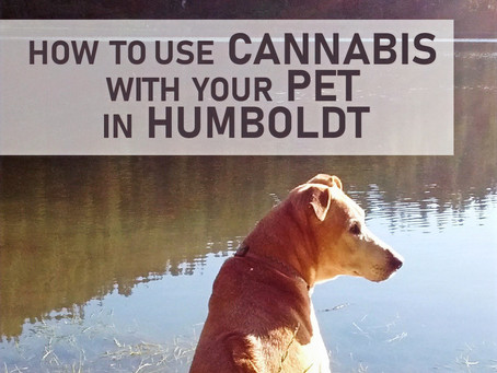 How to use cannabis with your pet in Humboldt