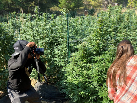 7 Tips for Cannabis Videography