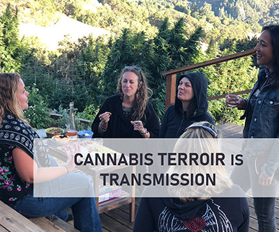 Cannabis Terroir is about Transmission