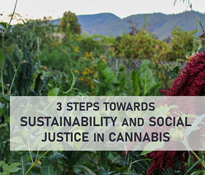 3 Steps towards Sustainability and Social Justice in Cannabis