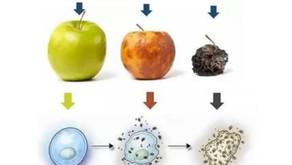 מה ההשפעה של ארוחה אחת על הבריאות שלנו