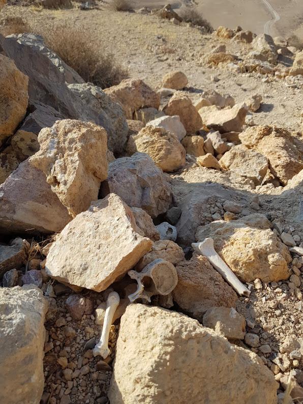 עצמות זרוקות במצודת הורקניה לאחר שוד