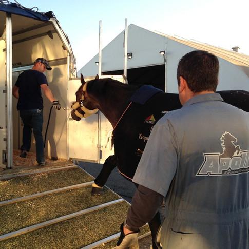 Apollo Equine domestic horse transport