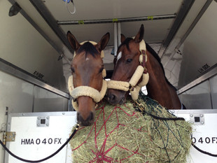 Apollo Equine domestic transport