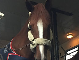 Horse importing