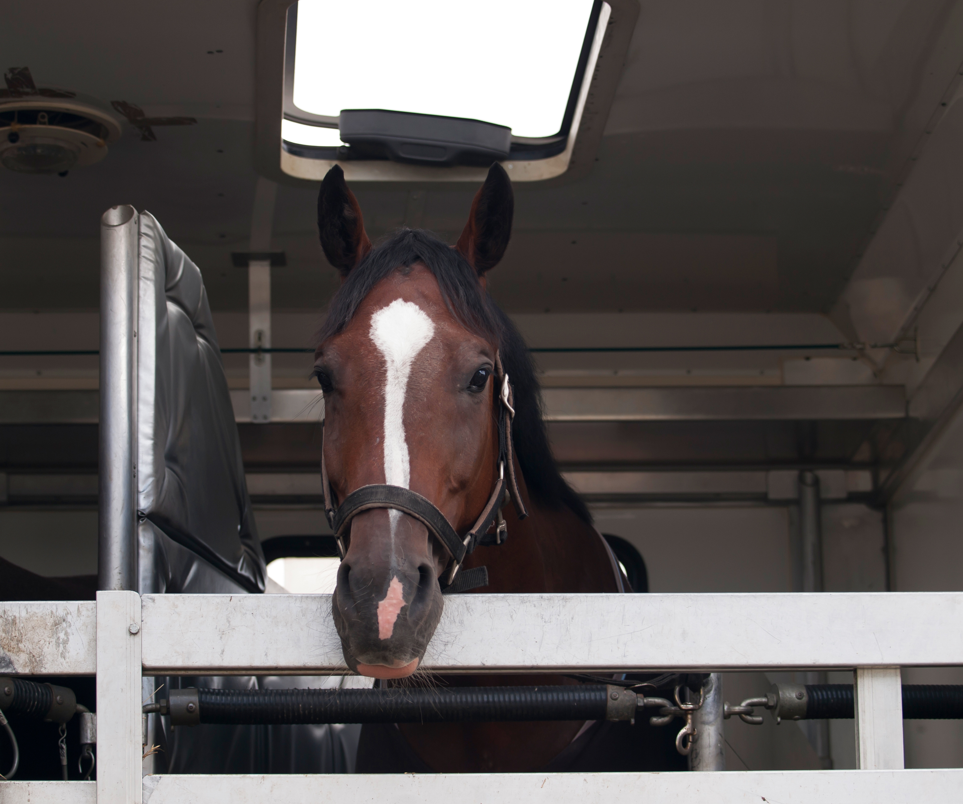 Apollo Equine Air Transport