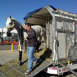 horse domestic air transport