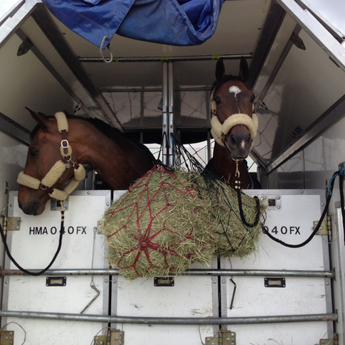 Apollo Equine domestic air transport