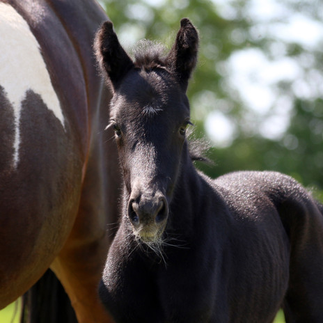 Filly Gin was born!