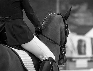 horses-4114224_edited_edited_edited_edit